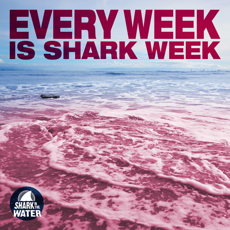 Shark in the Water - Every Week is Shark Week